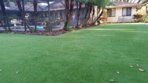 Budget Lawn Ideas