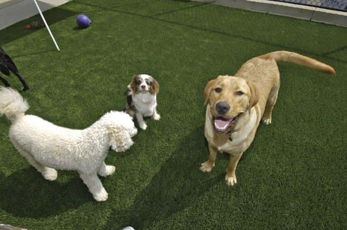 EasyTurf-Dog-pet facilities - Just Like Grass